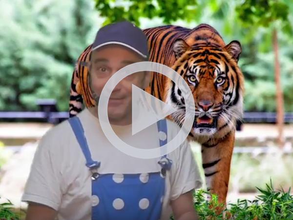 tigre ok